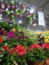 Kauniita kukkia ja värikkäitä ruukkuja